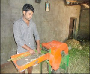Mr. Patric's Son cutting fodder using the fodder cutting machine
